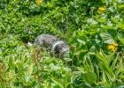 2014-07-20-Weinebene-Koralpe_61-W
