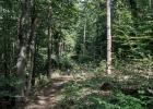 2014-08-29-Forrest-Walk_03