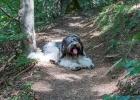 2014-08-29-Forrest-Walk_05