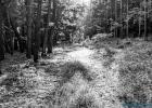 Wald B&W