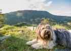 Clarence, im Hintergrund unser Grazer Hausberg