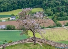 Blühender Baum