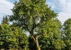 Baum am Weg hinunter
