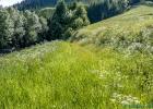 hoch wächst das Gras wenn es keiner schneidet