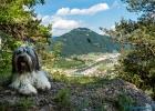 Blick vom Big View mit Clarence im Vordergrund