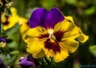 Blume mit tollen Farben