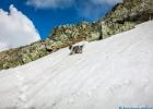 Vierpfoten-Antrieb auf einem kleinen Schneefeld