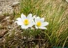 Blumen säumten den Weg