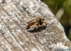 Insekt bei einer kleinen Pause neben mir auf dem Bankerl