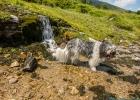 Clarence kneippt bei einem kleinen Wasserfall