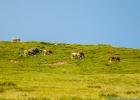 schaut nicht so aus, die Kühe grasen aber in ziemlich steilem Gelände