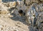 Clarence immer auf der Suche nach Schatten (beim Abstieg zur Leobner Hütte)