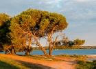Baum in der Morgensonne