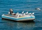 Bootsbesetzung etwas anders