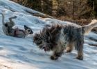 zwei Kasperl-Hunde haben ihren Spass