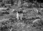 Clarence sitzt in der Blumenwiese