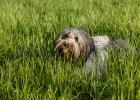Clarence versinkt im Gras