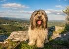 Cache-Dog Clarence beim Geocachen beim Novystein - hier hat man einen Ausblick auf den Schöckl