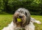 jaja der Tennisball, überlebt gerade mal eine Woche