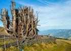 Baum bei der Rothaidenhütte