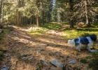 Sonnenstrahlen bahnen sich den Weg durch den Wald