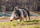 wenn er schneller ist als der andere Hund