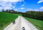 Weg Richtung Römergrab