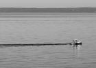 Fischer bei der Ausfahrt B&W