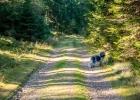gemütliches Wandern