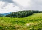 Blick auf die Almwiese unter dem Pommesberg