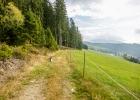 am Waldrand entlang zurück nach St. Kathrein