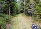 Wiesenweg durch den Wald