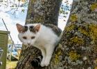 Katze in Brandlucken