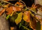 die Blätter welken