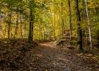 leicht bergauf durch den herbstlichen Wald