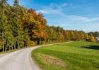 Herbststimmung am Waldrand