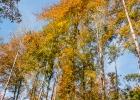 Bäume im Himmel