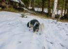 Clarence schnuppert mal was so im Schnee ist