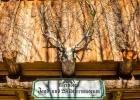 das kleinste Jagd- und Wildtiermuseum