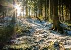 die Sonne strahlt durch die Bäume