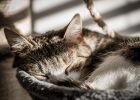 Gismo schlafend im Sonnenschein