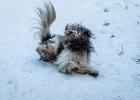 im Schnee da taugts ihm richtig