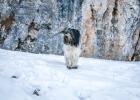 Clarence im Schnee