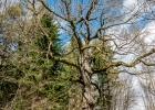 alter Baum am Weg