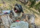 Cache-Dog Clarence bei einem Geocache