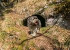 Clarence bei der Bärenhöhle