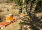 die Bienen sind schon fleißig am fliegen