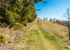 weiter auf dem Wiesenweg den Wald entlang