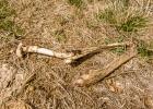 Überreste eines Rehs