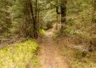 einen Waldpfad entlang
